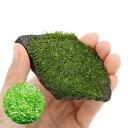 (水草)巻きたて リシア 輝板石 Sサイズ(無農薬)(3個)