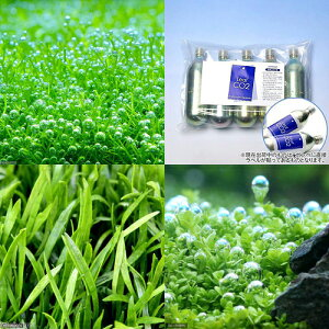 (水草)人気の水草 3種セット CO2ボンベ5本付き