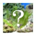 (海水魚 海藻)生餌 おまかせ海藻 1パック