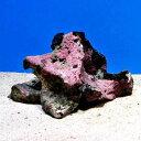 (海水魚)Aグレード 熟成化石サンゴ Sサイズ(13〜18cm)(1個)(形状お任せ)