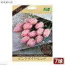 (観葉植物)チューリップ球根 切花最前線 ピンクダイヤモンド 7球詰(1袋)