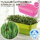 スプラウトファーム 24型 ピンク ワンちゃん用ペットグラスの種セット 水耕栽培 家庭菜園 関東当日便