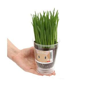 (観葉植物)種まき済み ペットリーフ栽培 ECOポッ