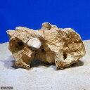 (海水魚)化石サンゴ バクテリア付き Mサイズ(20cm前後)(1個)(形状お任せ)