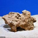 (海水魚)熟成化石サンゴ 一年物 Lサイズ(30cm前後)(1個)(形状お任せ)