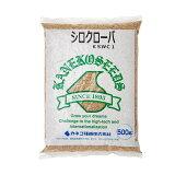 シロクローバ(シロツメクサ)の種子 500g 関東当日便