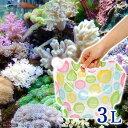 (海水魚)ポップカラー足し水くん 天然海水(海洋深層水)3リ...
