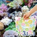 (海水魚)ポップカラー足し水くん 天然海水(海洋深層水)3リットル(3袋セット)(柄おまかせ) 航空便不可
