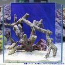 (海水魚)ライブロック 枝状 25〜30cm水槽レイアウトセット(1セット) 北海道・九州・沖縄航空便要保温