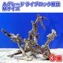 (海水魚)Aグレードライブロック 枝状Mサイズ(3個)(形状お任せ) 北海道・九州・沖縄航空便要保温