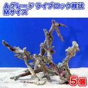 (海水魚)Aグレードライブロック 枝状Mサイズ(5個)(形状お任せ) 北海道・九州・沖縄航空便要保温