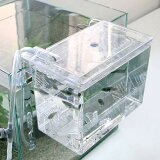 卵胎生鱼类的产卵卫星饲养箱挂出了奠基仪式明天关东[音乐][外掛式産卵飼育ボックス サテライト 関東当日便]
