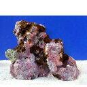 (海水魚)ライブロック EXSグレード レッドロック Mサイズ(5個)(形状お任せ) 沖縄別途送料 北海道・九州航空便要保温