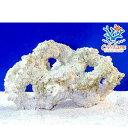 (海水魚)C.P.Farm バクテリア付きライブロックレプリカ Lサイズ 1個(形状お任せ)