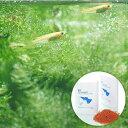 (めだか)ヒメダカ初心者セット ヒメダカ(6匹)+小型魚用フード ff num03 40ml 本州・四国限定