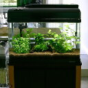(水草 熱帯魚)おまかせ 2灯用レイアウトセット 流木付 60cm水槽用 6種(無農薬) 水草説明書付