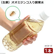 (生餌)オオミジンコ入り飼育水(500ml) 北海道航空便要保温