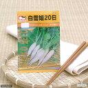 お家で安心でおいしい野菜を!野菜の種 白雪姫20日大根 品番:1510 【あす楽対応_関東】