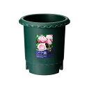 バラ鉢 ダークグリーン 8号 φ24×24cm【関東当日便】