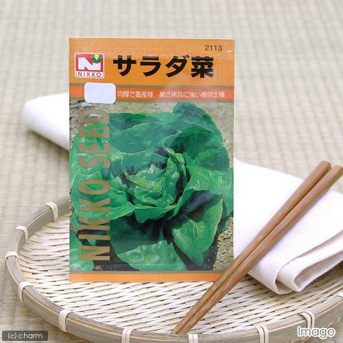 野菜の種 サラダ菜 品番:2113 家庭菜園 関東当日便