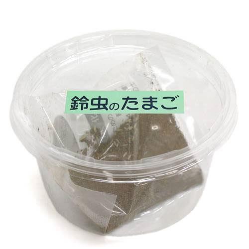 鈴虫(スズムシ)のたまご 約30ヶ入 関東当日便