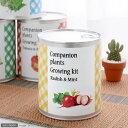 1缶で2種類の仲良し植物が育ちます!コンパニオンプランツ栽培キット ラディッシュ&ミント 【あす楽対応_関東】