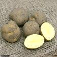 (観葉)種イモ ジャガイモ キタアカリ(お買い得5個セット)(草木灰付き) 家庭菜園