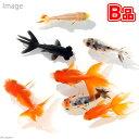 (国産金魚)(B品)金魚ミックス Sサイズ(5匹)