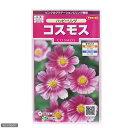 花壇に!コンテナに!切り花に!花の種 ハッピーリング コスモス 品番:905174 【あす楽対応_関東】