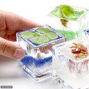 (ビオトープ/浮草)私の小さなアクアリウム 〜ウキウキ気分な浮き草セット(ブロックグラスS・4ポット)〜 本州・四国限定