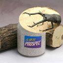 (昆虫)ギラファノコギリクワガタ(フローレス産)幼虫(1匹) + 大夢B プロスペック 800cc(