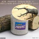 (昆虫)ギラファノコギリクワガタ(フローレス産)幼虫(3匹) + 大夢B プロスペック 800cc(