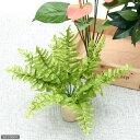 GEX エキゾテラ レインフォレストプランツ ボストンファーン Sサイズ 爬虫類 レイアウト用品 造花 人工植物 ジェックス 関東当日便