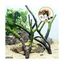 (水草)巻きたて ジャイアント南米ウィローモス付 枝状流木 Mサイズ(約20cm〜)(無農薬)(1本) 北海道航空便要保温