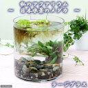 (めだか 水草)私のアクアリウム 〜日本水景のメダカ〜ラージグラス(直径18.0×H20cm) 説明書付 飼育セット 本州・四国限定