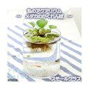 (めだか 水草)私のアクアリウム〜メダカのかくれんぼ フレッシュネスバージョン〜 スモールグラス 飼育セット 本州・四国限定
