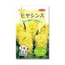 (観葉植物)ヒヤシンス球根(水栽培向き) 黄色(シティオブハーレム)(1球)