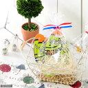 (観)育てる植物ストラップ ベビーツリー ~ギフトバージョン~(種類おまかせ1個) 【あす楽対応_関東】