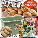 (観葉)プランターで育てる ジャガイモ栽培セット メークイン 家庭菜園