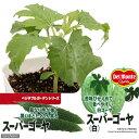 (観葉)緑のカーテン デルモンテ 野菜苗 スーパーゴーヤ(白)苦味ひかえめ 3号(1ポット) 家庭菜園