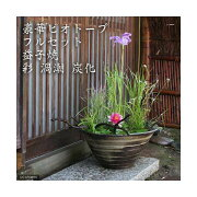 (ビオトープ)(めだか)豪華ビオトープフルセット(ビオ植物10種+睡蓮鉢(スイレン鉢) 益子焼 彩(SAI)渦潮 炭化) 本州四国限定