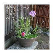 (ビオトープ)(めだか)豪華ビオトープフルセット(ビオ植物10種+睡蓮鉢(スイレン鉢) 益子焼 彩(SAI)渦潮 焼締) 本州・四国限定