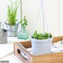 (観葉植物)ぶらりサキュレント ピーチネックレス 3号吊り鉢タイプ(1鉢) (説明書付)