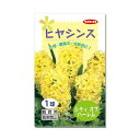 (観葉植物)ヒヤシンス球根(水栽培向き) 黄色(シティオブハーレム)(5球)