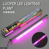 お1人様2点限り ルシファ LEDライト600 プランツ 60cm水槽用照明?LEDライト 関東当日便