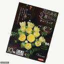 (観葉)チューリップ球根 花のある暮らし。人気上昇中品種シリーズ ベロナ 10球詰(1袋)