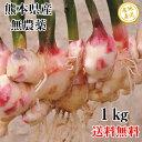 ショッピング1kg 新生姜 しょうが 無農薬 1kg 熊本県産  送料無料