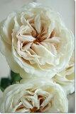 【定形外発送対応可能】ノスタルジックローズ(クリームベージュ)1本【造花・アートフラワー】