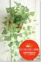光触媒 造花 壁掛け グリーン 消臭 フェイクグリーン インテリアグリーン 壁掛けインテリア 壁飾り 観葉植物光触媒 ハンギング【アイビー壁掛け】