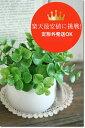 光触媒 フェクグリーン 光触媒 観葉植物 光触媒 インテリアグリーン光触媒 造花【ユーカリポット】